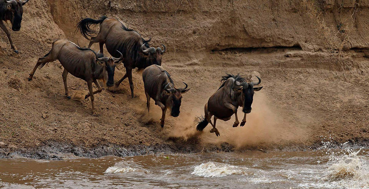 Wildebeest Migration river crossing best time visit Tanzania