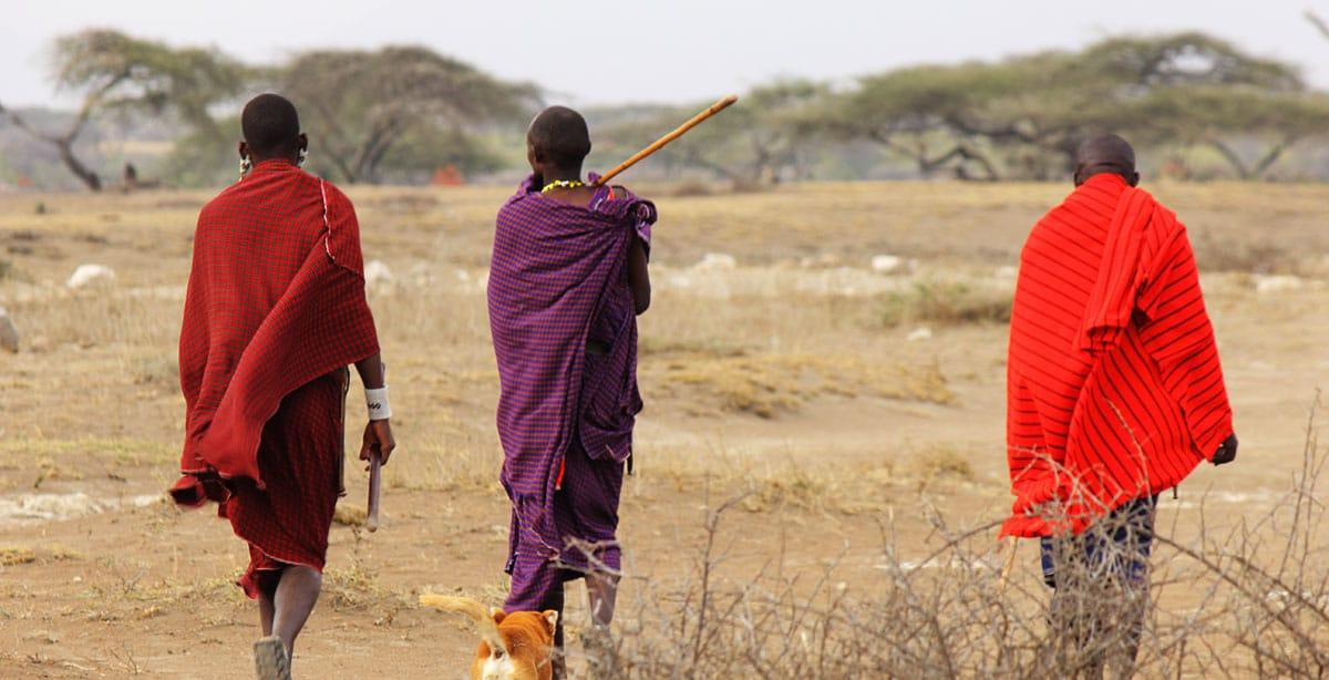Maasai walking savannah in Tanzania cultural safari