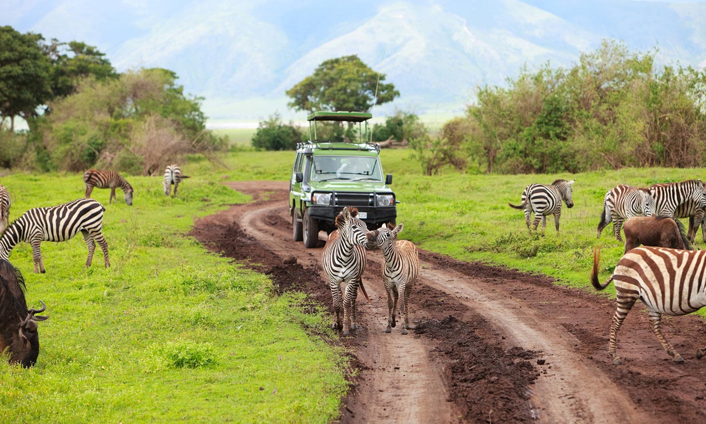 Tanzania Safari Itinerary Be Like