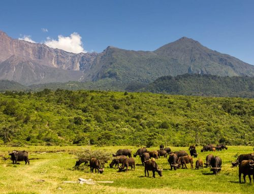 13 Reasons Why Tanzania is the Top Safari Destination in Africa