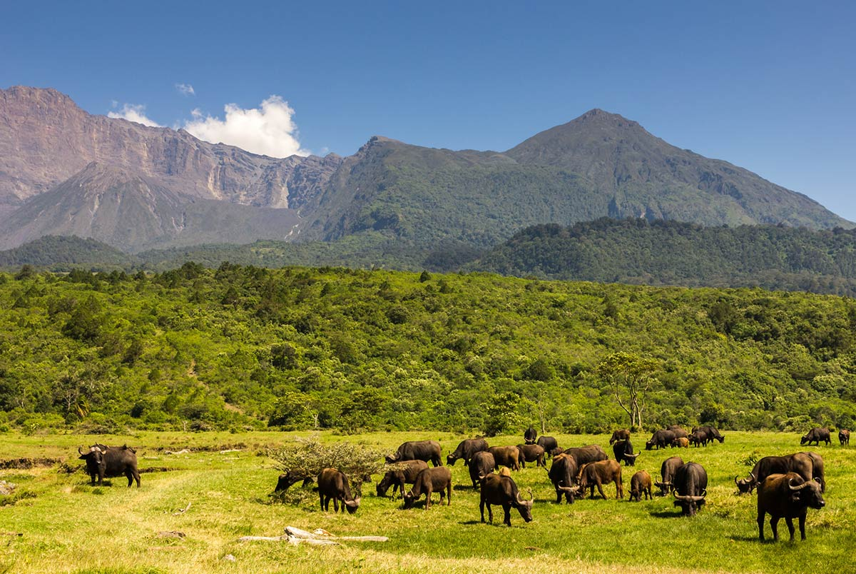 Arusha Park top safari destination in Africa