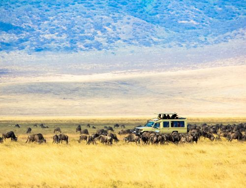 How Much Does a Tanzania Safari Cost