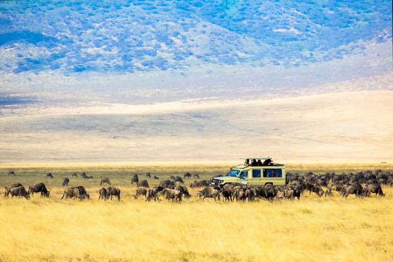 Game View at Affordable Tanzania Safari Cost