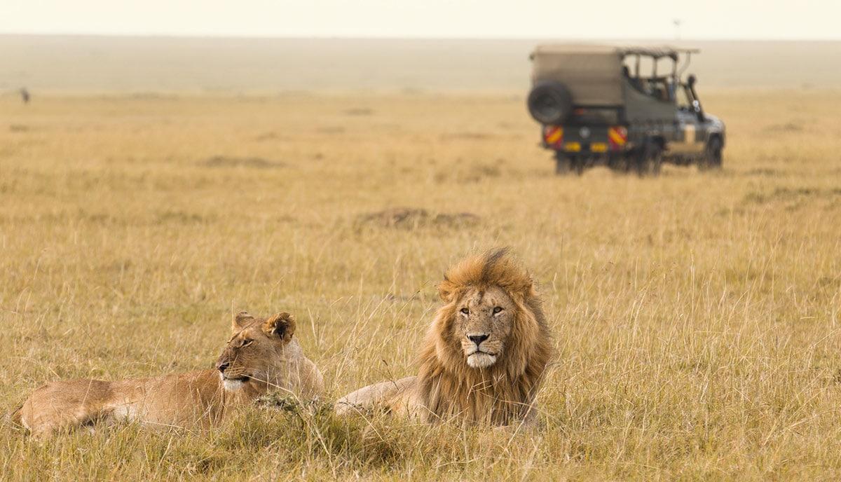 Game Drive, Tanzania safari vs Kenya