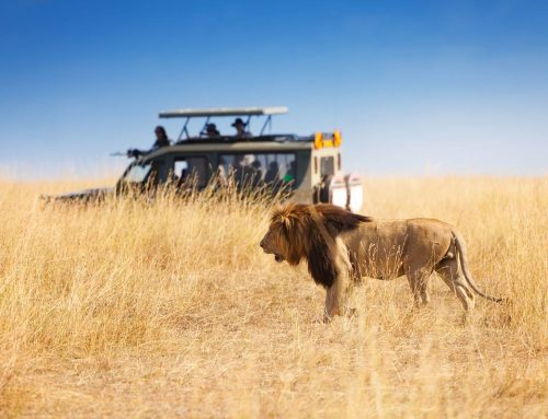 10 Things You Shouldn't Do When You're on Safari in Africa
