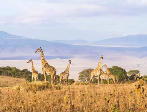 International Travel Tips to Make Tanzania adventure Tours Safe & Easy