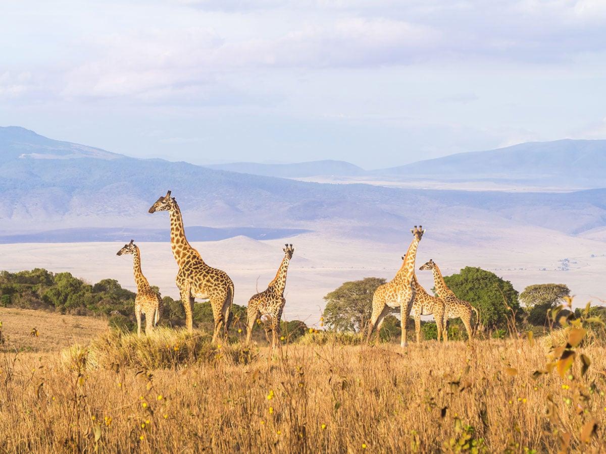 Tanzania adventure Tours