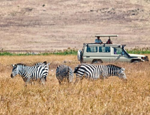 8 Tanzania Safari Trips That Will Actually Change Your Life