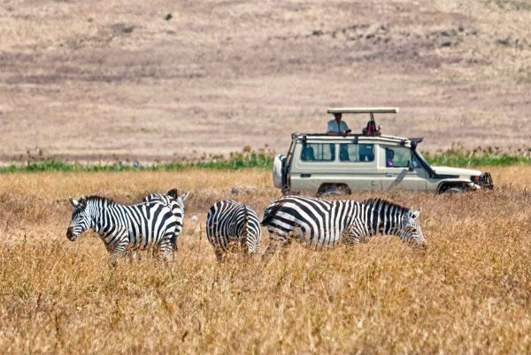 Torist watching Zebra during Tanzania Safari Trips