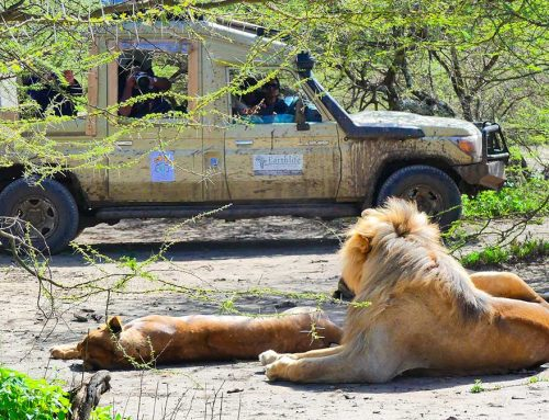 The Top 10 Best African Safari Wildlife Parks