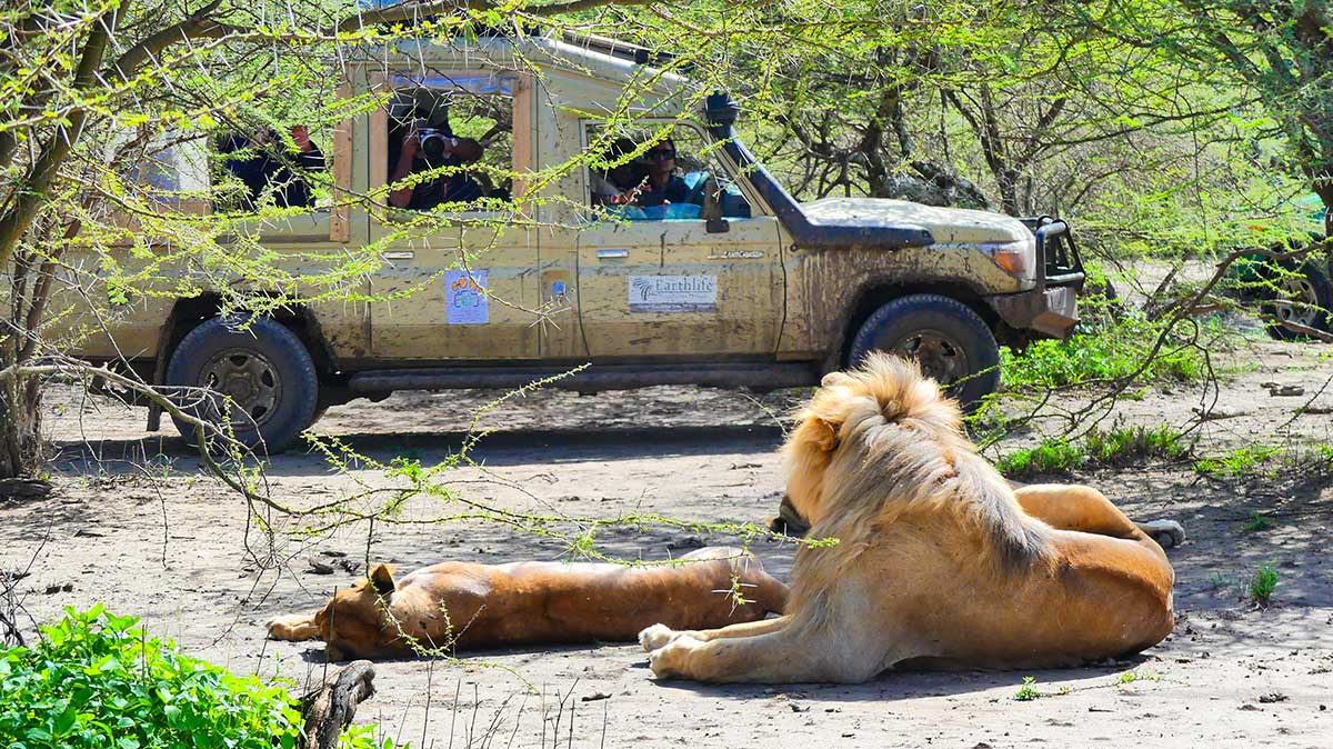 African Safari Wildlife Park with Earthlife Expeditions