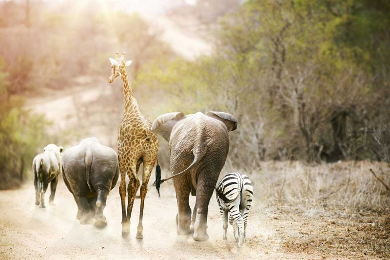 Best Country For Safari, tanzania or south africa for safari