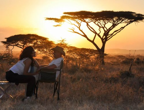 The Best Countries to Visit for a Honeymoon Safari in Africa