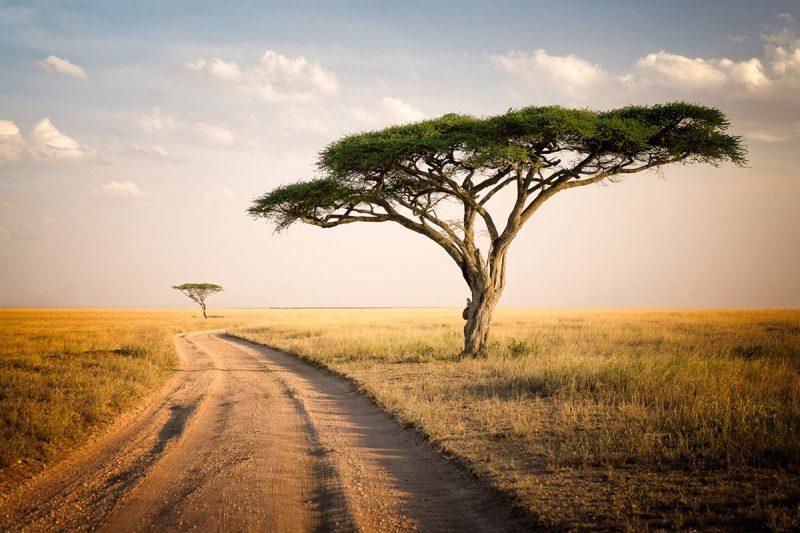 Tanzania Family Safari on the savannah