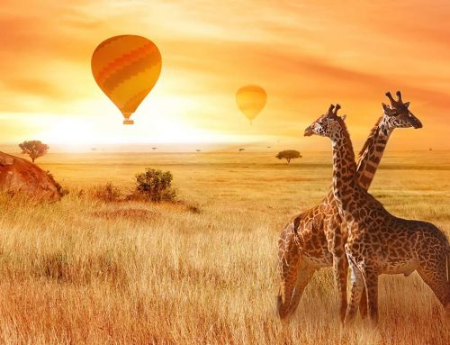 The Top 5 Ways to Have a Successful Balloon Safari in 2018
