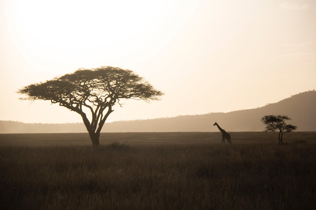 best African countries to visit, Giraffe and The Savannah