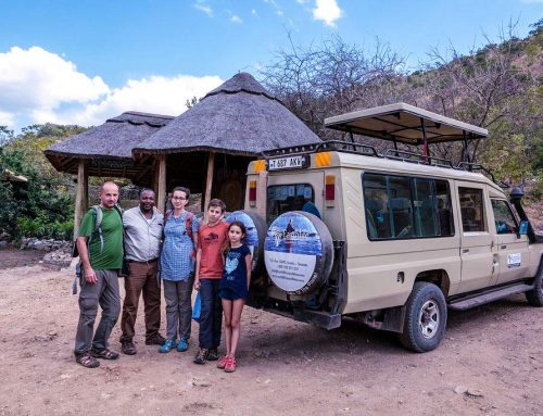 Step by Step to Choosing the Best African Safari Companies