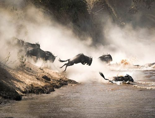 The Great Wildebeest Migration Across the Serengeti: 8 Must-Have Items to Take