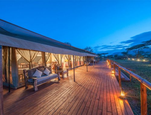 11 Best Mid-Range Serengeti Safari Lodges & Camps of 2018