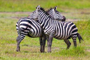 Planning African Safari