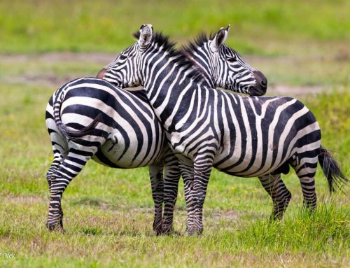 7 Things to Consider When Planning an African Safari