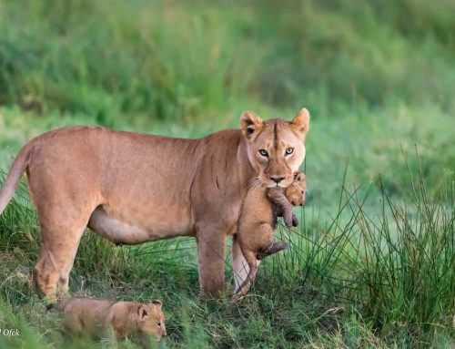12 Safari Photography Tips for Catching Animals in Action