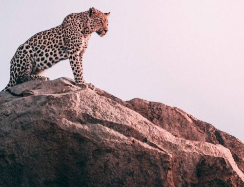Well Spotted: An Introduction to the Africa Big Five