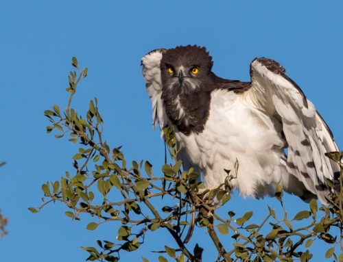 7 Tips for Spotting Birds on Safari