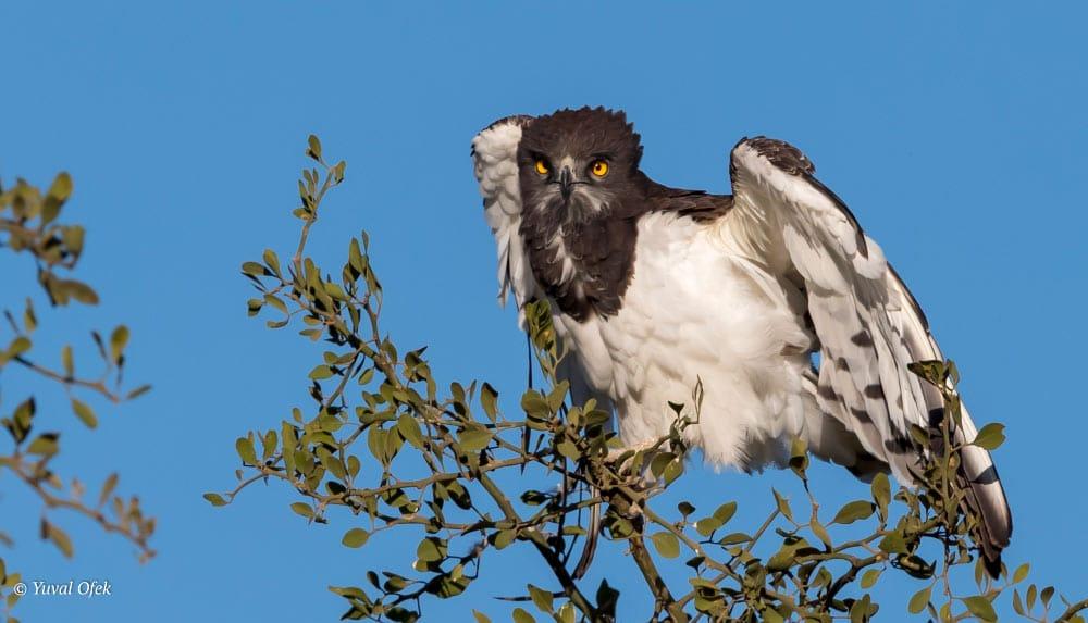 Spotting Birds On Safari