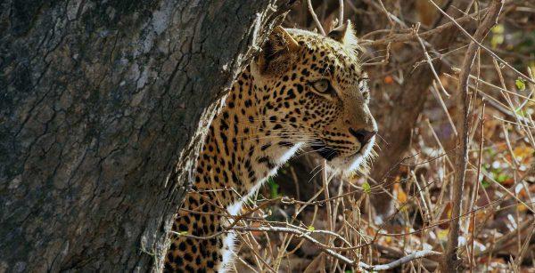 3 Day Safari, Lake Manyara, Ngorongoro & Tarangire