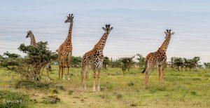4 Day Tanzania Safari