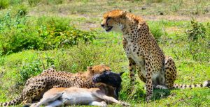 5 Day Tanzania Wildlife Adventures