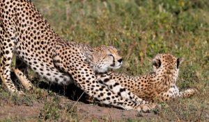 Private or Group Tanzania Safari