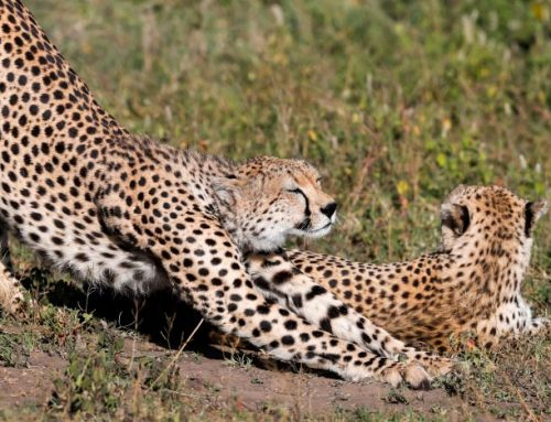 What is the best option, private or group Tanzania safari?