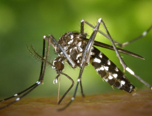 Dengue Fever in Tanzania: Useful Travel Information before Your Visit