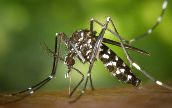 Dengue Fever in Tanzania