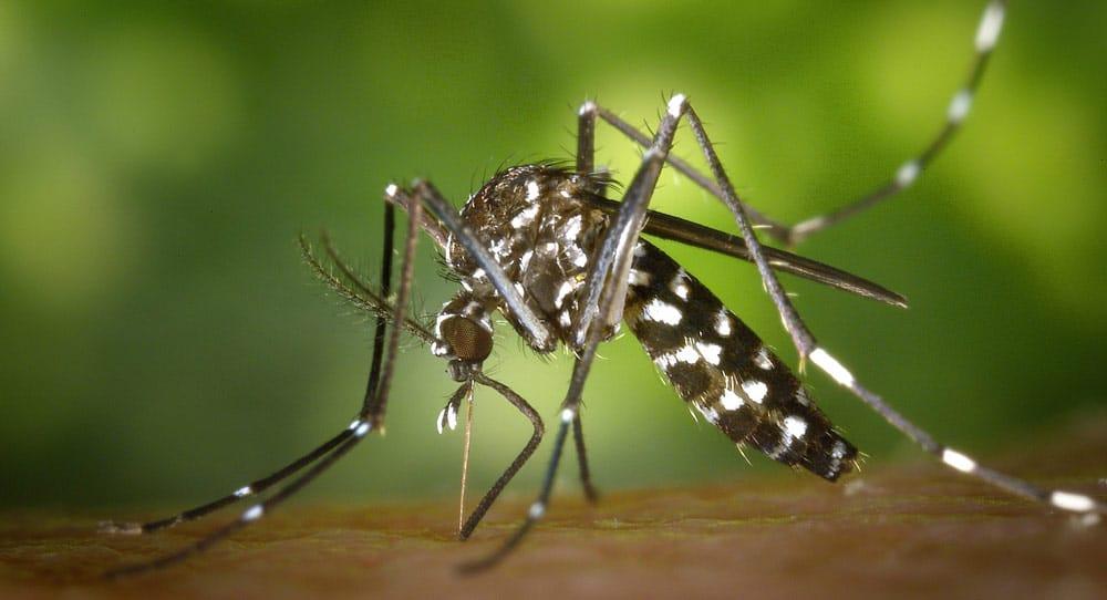 Dengue Fever in Tanzania