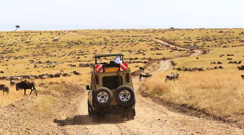 Best of Kenya and Tanzania safari