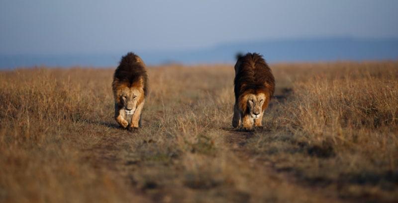 5 Days Maasai Mara Luxury Safari