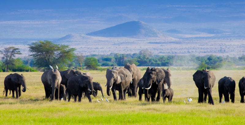 Owesome Kenya luxury safari