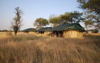 Mara Under Canvas on dry season