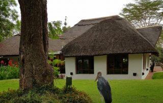 Birds always Visit the Lodge