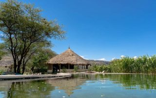 Maasai Giraffe Swimming Pool