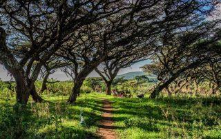 Main Walkway & Nature at Ang'ata Camp