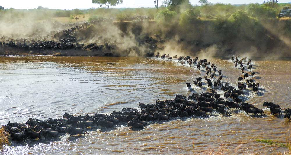 Serengeti Wildebeest Migration, The Best African Safari Experience