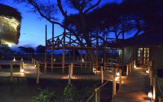 Tree Top Platform