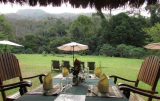 Forest View From Dining